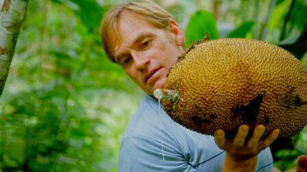 Guarda Costa Rica. Episodio 3della Stagione1.